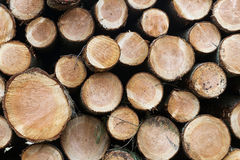 Pile of small cut trunks of spruce tree wood stock photography