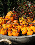 Pile of small cute pumpkins Royalty Free Stock Photography