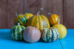 Pile of small cute pumpkins at pumpkin patch Stock Image