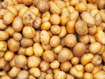 Pile of small potatoes Royalty Free Stock Images