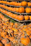 Pile of small pumpkins Royalty Free Stock Images
