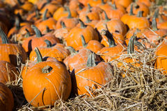 Pile of small pumpkins Stock Images
