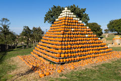 Pile of small pumpkins Royalty Free Stock Photos