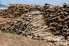 Pile of small wood logs Stock Images