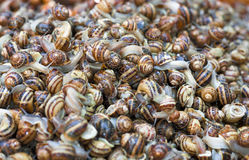 Pile snails Stock Photography