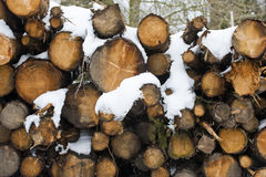 A pile of snow covered logs Stock Photography