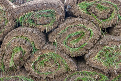 Pile of sod rolls background Stock Image