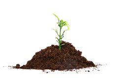 Pile of Soil and Green Seedling Royalty Free Stock Photo