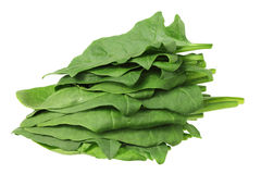 Pile of Spinach Leaves Stock Photo