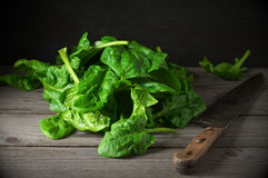 Pile of spinach savoy Royalty Free Stock Photo