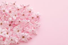 Pile of spring hyacinth flowers on color background. Closeup. Space for text stock photos