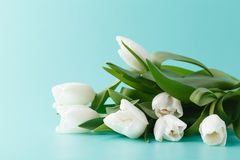 Pile of spring tulips Royalty Free Stock Photos