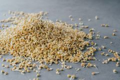 Pile of sprouted green buckwheat on grey background. Germinated raw vegetarian product. Growing sprouts. Healthy lifestyle concept royalty free stock image