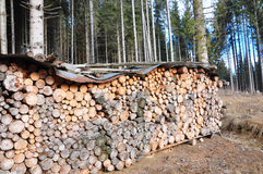 Pile of spruce wood Royalty Free Stock Images