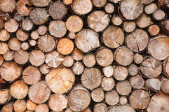 Pile of spruce wood Stock Photos