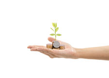 A pile of stack coin and growing sapling tree on hand Royalty Free Stock Images