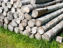 Pile of stacked cut logs on grass. Pile of stacked cut softwood logs on green grass Royalty Free Stock Image