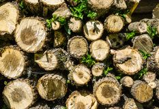 Pile of stacked firewood royalty free stock image