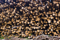 Pile of stacked wood Royalty Free Stock Photography