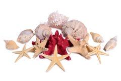 Starfish seashells shellfish isolated. Pile of starfish seashells shellfish isolated on white background Stock Image