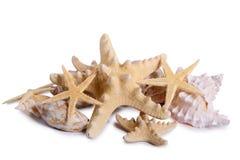 Starfish seashells shellfish isolated. Pile of starfish seashells shellfish isolated on white background Stock Photo
