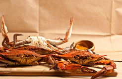 Pile of steamed and seasoned Colossal chesapeake blue crabs Stock Photo