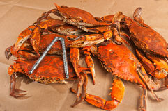 Pile of steamed and seasoned Colossal chesapeake blue crabs Royalty Free Stock Photography