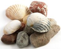 Pile of stone with shell Royalty Free Stock Photography