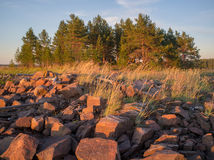 A pile of stones and group of trees. A pile of stones among the reeds, and in the background oasis of pine trees stock images