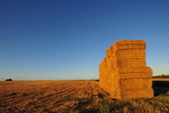Pile of straw bales Stock Image