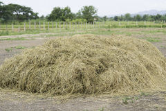Pile of straw Stock Images