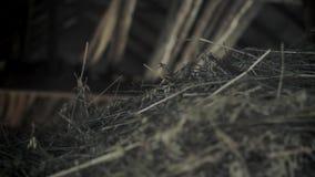 Pile of straw inside of a dark barn stock video