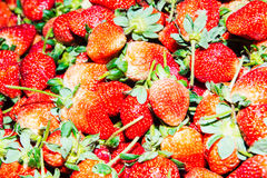 Pile of strawberries Stock Images