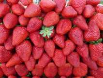 Pile of Strawberries Royalty Free Stock Image