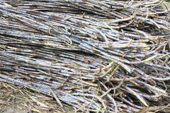 A pile of sugarcane Stock Images