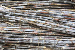 A pile of sugarcane Stock Photos