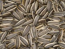 Pile of sunflower seed Stock Photography