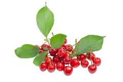 Pile of a sweet cherries and branch with leaves Royalty Free Stock Photos