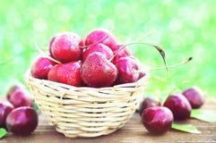 Pile of sweet fresh cherries in basket. Heap of summer organic berries, selective focus royalty free stock photo