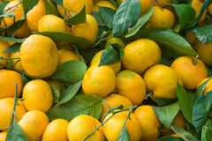Pile of tangerines. Pile of fresh yellow tangerines Royalty Free Stock Images