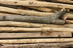 Pile of thin wooden sticks Stock Images