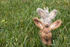 Three Felted Rabbits or Bunnies on Right Side of Grass royalty free stock images