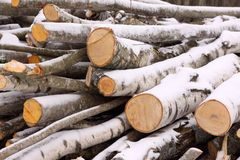 Pile of timber. Pile of freshly cut timber covered with snow Royalty Free Stock Images