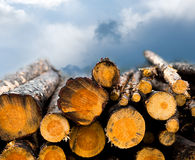 Pile of timber Royalty Free Stock Photography