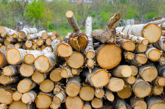 Pile of timber with a green garden background chopped and arrang Royalty Free Stock Photography