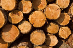 Pile of timber after logging Royalty Free Stock Photography