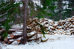 Pile of timber Royalty Free Stock Image