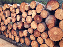 Pile of timber ready for shipment Royalty Free Stock Photography