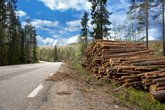 Pile of timber Royalty Free Stock Images