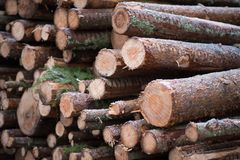 Pile of timber in a snowy Sweden Royalty Free Stock Photos